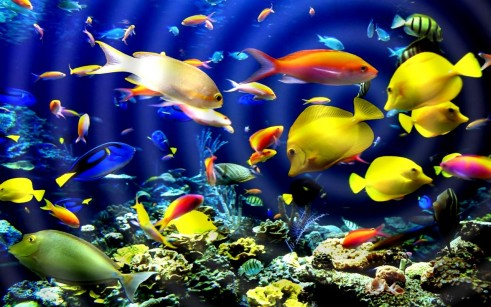 touch-colorful-exotic-fish-762885-1-s-307x512